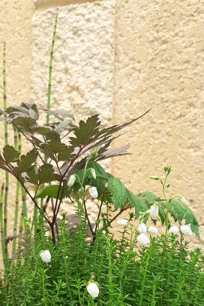 DIY jardinière moderne mi-ombre à réaliser soi-même