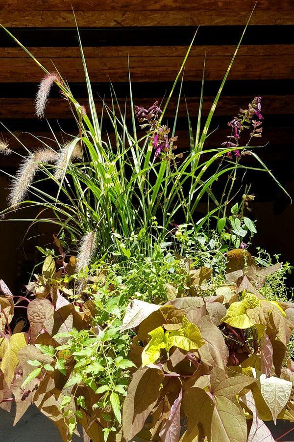 Idée DIY grande jardinière plein soleil au style nature et champêtre