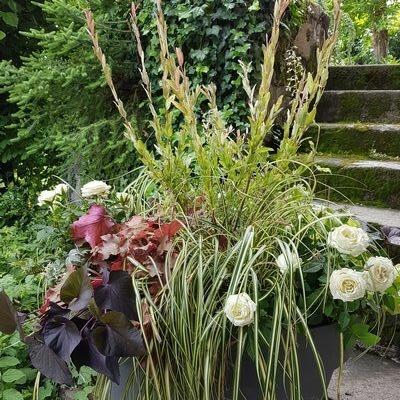 Coaching jardin création composition nature et sauvage