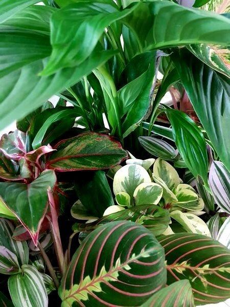 Composition de plantes vertes esprit Urban Jungle