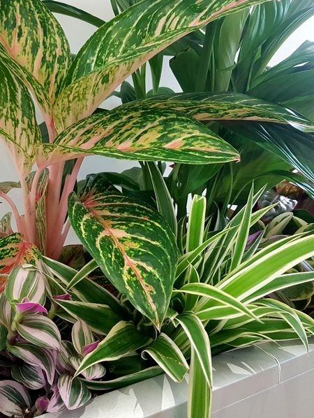 Créer une jungle intérieure grâce à une composition de plantes vertes d'intérieur - DIY
