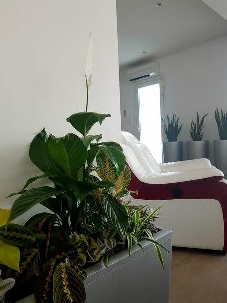 Plantes vertes pour jungle intérieure dans une maison contemporaine.
