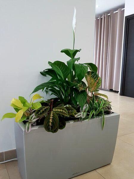 Jungle intérieure contemporaine: idée DIY pour une composition de plantes vertes